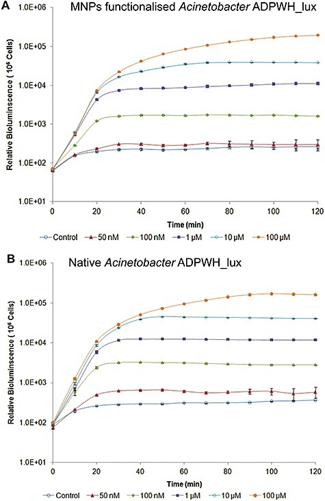 Comparison of dynamic sensing behaviour of MNPs‐functionalized (A) and native Acinetobacter ADPWH_lux (B). Cells are induced by different concentrations of salicylate.