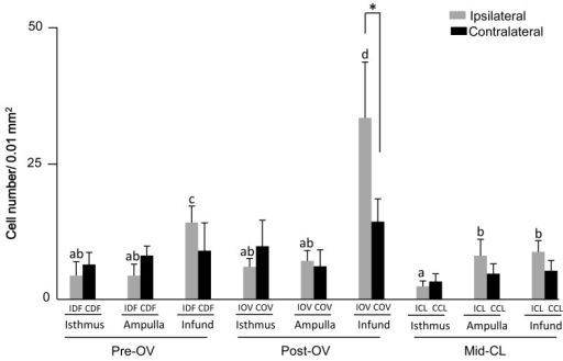 Number of eosinophils in the different regions of the bovine oviduct during theestrous cycle. Pre-OV: preovulatory phase; Post-OV: postovulatory phase; Mid-CL:mid-cycle corpus luteum; IDF: oviducts ipsilateral to the preovulatory dominantfollicle; CDF: oviducts contralateral to the preovulatory dominant follicle; IOV:oviducts ipsilateral to the ovulated ovary; COV: oviducts contralateral to theovulated ovary; ICL: oviducts ipsilateral to the corpus luteum; CCL: oviductscontralateral to the corpus luteum; Infund: Infundibulum. Data are presented as themean ± SEM. a-d Different letters for black bars indicate significant differences(P<0.05) among the oviduct ipsilateral to dominant follicle,ovulated ovary and the corpus luteum. * Indicates significant differences(P<0.05) between ipsilateral and contralateral infundibula tothe ovulated ovary at postovulatory phase.