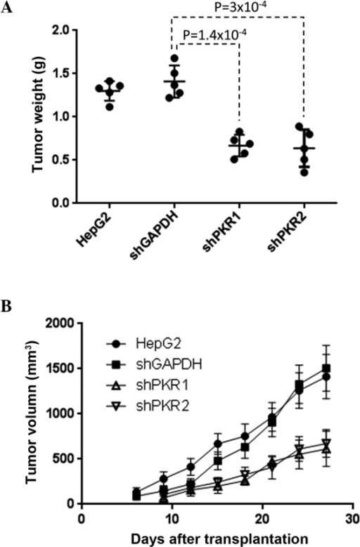Tumorigenic role of RNA-dependent protein kinase (PKR) in HepG2 human hepatocellular carcinoma cells. (A) Weight and (B) volume of tumors following the transplantation of control HepG2 cells and HepG2 cells in which PKR had been knocked down. (A) Weight of xenografted tumors 27 days after transplantation. The data from five individual mice are shown as scattered dots, along with the average weight and standard errors. (B) Tumor volume was measured every three days. Error bars signify the standard error of five biological replicates.