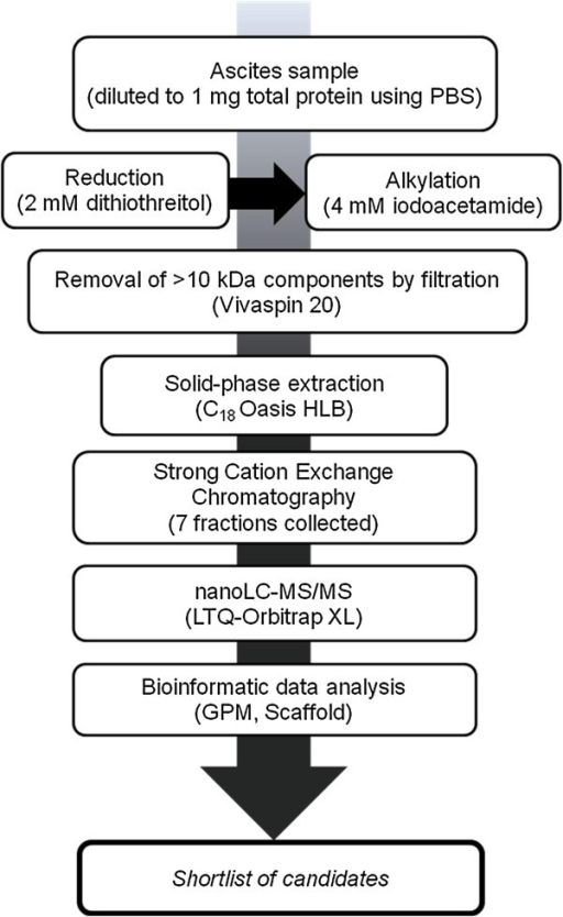 Outline of experimental workflow (peptidomic analysis). The workflow consisted of the following: sample processing, followed by strong cation exchange and reverse-phase chromatography coupled online to an LTQ-Orbitrap mass spectrometer and subsequent data analysis.