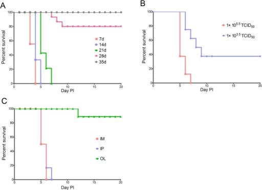 Survival rates of gerbils infected with EV71.(A) Gerbils (7, 14, 21, 28, and 35 d old) were inoculated IP with 1x105.5 TCID50 of EV71 (n = 6 for each age group). (B) 21-day-old gerbils were inoculated with 1×103.5 or 1×105.5 TCID50 of EV71 via IP (n = 8 for each dose group). (C) 21-day-old gerbils were inoculated with 1×105.5 TCID50 of EV71 via IP, IM or OL respectively.
