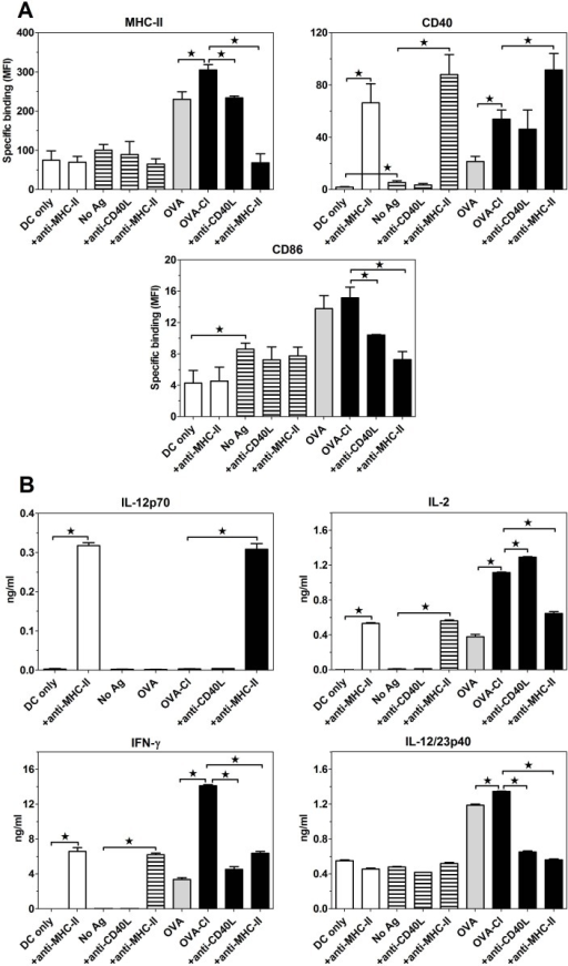 Expression of MHC-II and co-stimulatory molecules on BM-DC (A) and cytokine production (B) in the co-culture of BM-DC with OT-II Th lymphocytes.Purified BM-DC (2.5 × 105) were co-cultured with CD4+ OT-II splenocytes (7.5 × 105) for 2 days in 1 ml of medium, with or without 10 μg/ml OVA or OVA-Cl. When indicated, 5 μg/ml of blocking anti-MHC-II mAb or 25 μg/ml anti-CD40L mAb was additionally included. Expression of proteins on BM-DC surfaces was assessed by flow cytometry and cytokine concentration in culture supernatants by ELISA. The results shown are averages +SEM from 4 independent experiments (A) or means +SEM of 4 replicates obtained in a single, representative experiment (B). The data were analysed by ANOVA, combined with the Tukey-Kramer post-test. *, p < 0.05.