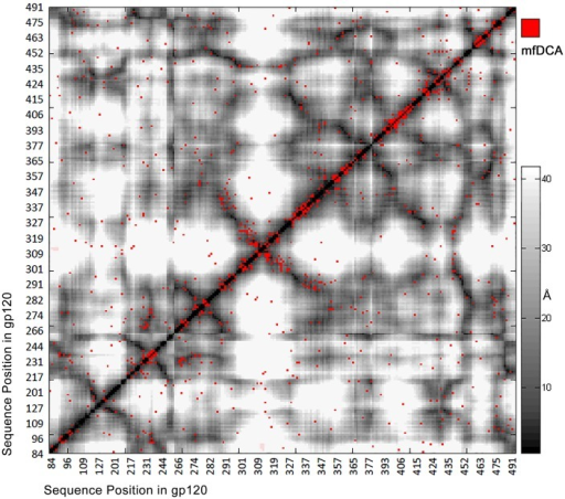 mfDCA coupling overlaid on the contact map of 2B4C.G structure.Significant couplings are marked with red dot to the background of gray level coded distances in angstroms. As expected, most of the significant values were along the diagonal indicating both primary and tertiary structure proximity. Those of highest intensity were aligned on the diagonal (not shown). A number of long range interactions (red dots in white areas) are observed also.
