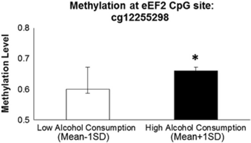 Increased methylation of cg12255298 (located in the 3′-UTR of EEF2 on Chr 19) for individuals with higher drinking days per month in the DNHS. Although alcohol consumption was analyzed continuously, it is presented dichotomously here for ease of presentation. Low alcohol consumption is defined as 1 s.d. below the mean value of alcohol consumption in the DNHS, whereas high alcohol consumption is defined as 1 s.d. above the mean value of alcohol consumption in the DNHS. Significant difference, *P<0.05. DNHS, Detroit Neighborhood Health Study; UTR, untranslated region.
