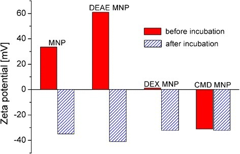 Zeta potential of MNP and for MNP coated with DEAE-dextran, dextran, and CM-dextran before (red columns) and after serum incubation (blue hatched columns) confirms formation of a protein corona around magnetic nanoparticles during serum incubation