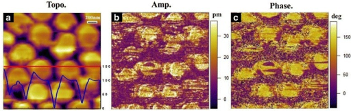 Piezoresponse images for the polarization reversal process in the nanodot arrays. a Topological, in which the blue line represents the AFM cross-sectional height data along the scanned red line. b Piezoresponse amplitude and c phase micrograph of the PZT nanodot arrays on a Pt/Si substrate in the same selected area