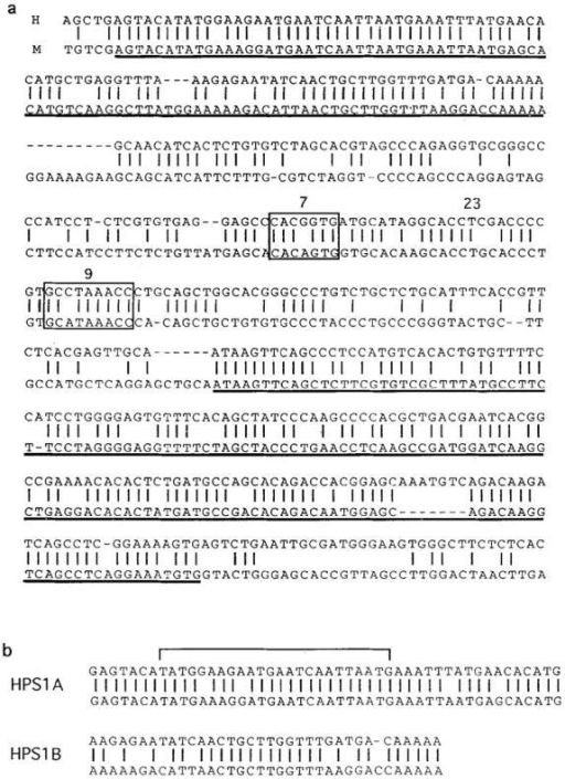 Sequence of human  and murine δREC. (a) Comparison of human δREC and murine  δREC1. Human sequence is  shown on the top line, murine  sequence on the bottom. Vertical lines represent identity between the two sequences; dashes  represent gaps in the sequence  placed by the analysis software  for better fit. The canonical h-s-n  recombinase recognition motif  is boxed and labeled. The dark  underlines outline the two areas  of ∼80% identity between human and mouse, HPS1 and  HPS2, respectively. (b) HPS1 has  been broken into the two areas  HPS1A and HPS1B. Human sequence is on the top, murine sequence on the bottom. The bracket outlines the area of HPS1A that is protected during DNAse I footprinting  (footprint not shown). These sequence data are available from EMBL/ GenBank/DDBJ under accession numbers Y13607Y13607 and Y13608Y13608.