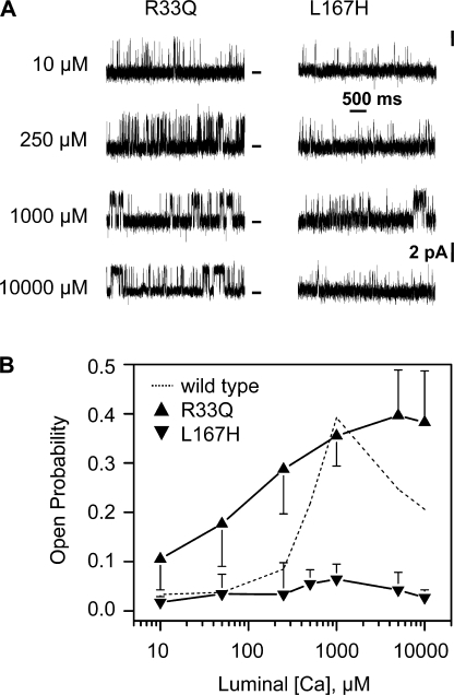 Luminal Ca2+ regulation of RyR2 channels by the CSQ2-R33Q and CSQ2-L167H mutants. Mutant CSQ2 (0.5 μg/ml) was added to the luminal side of previously CSQ2-stripped channels. Cytosolic free Ca2+ concentration was 1 μM and luminal Ca2+ was titrated from 10 μM to 10 mM. Holding potential was 0 mV and the luminal solution contained 100 mM Cs+. (A) Example channel recordings with CSQ2-R33Q (left) or CSQ2-L167H (right) present are shown (zero current level marked). (B) Summary Po results. The CSQ2-R33Q data (triangle) was collected on eight different channels. The CSQ2-L167H data (inverted triangles) was collected on eight different channels as well. Dotted line represents CSQ2-WT result presented in Fig. 2 B.