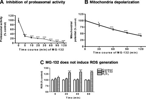 Proteasome inhibition by MG-132 precedes mitochondria depolarization. (A) Determination of proteasomal activity. N27 dopaminergic neu-ronal cells were treated with 5.0 μM MG-132 for 0-120 min and chymotrypsin-like proteasomal activity was assessed using Suc-LLVY-AMC. Enzymatic activity is presented as percentage of the control group. Values represent mean ± S.E.M for 6 samples in each group. (B) Flow cytometric determination of mitochondrial membrane potential. N27 cells were treated with 5.0 μM MG-132 for 0–120 min. The intensity of red fluorescence for aggregated JC-1 and green fluorescence for monomer JC-1 was determined using flow cytometry, and the red/green ratio was used as the measurement of membrane potential. Values presented as mean ± S.E.M represent results of 4–6 individual samples. (C) Flow cytometric measurements for ROS. N27 cells following exposure to 5.0 μM MG-132 for 0, 20, 40 or 60 min, and intracellular ROS was quantified by flow cytometry using dihy-droethidine fluorescent probe. Data represent the mean ± S.E.M. for 3–5 samples. 200 μM H2O2 was used as positive control. *P<0.05, ***P< 0.001 compared with control group. (D) ROS production using CM-H2DCFDA (DCF) or dihydroethidium (DHE) following 5.0 μM MG-132 treatment for 6 hrs. N27 cells cultured in 96-well plate were treated with 5.0 μM MG-132 for 6 hrs. The cells were then incubated with DCF or DHE before visualization under fluorescence microscopy. H2O2 (50 μM)-treated cells were included as a positive control for ROS production.
