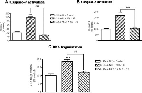 Inhibition of the mitochondria-mediated apoptotic cascade by PKCδ siRNA. N27 cells were transfected with non-specific siRNA (siRNA-NS) or siRNA for PKCδ (siRNA-PKCδ). Twenty-four hours after transfection, cells were treated with 5.0 μM MG-132 for 120 min and then activities of caspase-3 (A) and caspase-9 (B) and DNA fragmentation (C) were assayed. Data are presented as mean ± S.E.M. from 5 samples in each group. ***P< 0.001 compared to vehicle-treated control cells. ##P <0.01, ###P <0.001, comparison between the indicated groups.