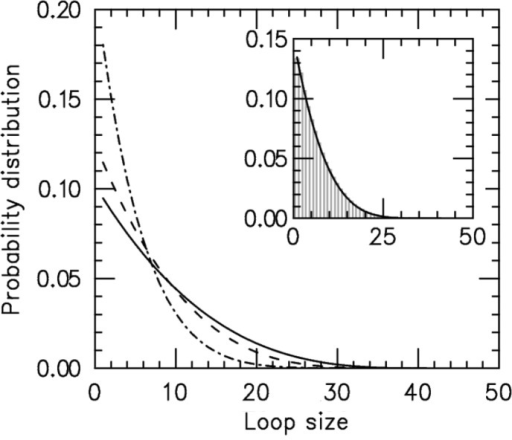 Loop-size distribution for M = 5 pairs of non-disassociating loop-extruding machines on a lattice of size L = 50. The probability distribution broadens as the bias () increases. Main figure shows results for  1.05 (dot-dashed line), 1.5 (dashed line) and 4.0 (solid line). Inset: comparison of steady-state loop-size distributions for exact statistical theory (solid black line) and kinetic simulation  (gray bars); difference between them is negligibly small. The simulation was run  times, each for a time of  Standard errors for the histogram bars have a maximum value of  and are invisible on this plot.