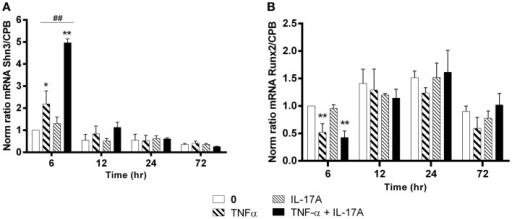 Effects of Il-17A and TNF-α on Schnurri-3 and Runx2 are shown. hMSCs were cultured in osteogenic medium in the presence or absence of TNF-α 1 ng/ml and/or IL-17A 50 ng/ml. Osteogenic gene expression Shn3 (A) and Runx2 (B) were measured by qRT-PCR at early time points of 6, 12, 24, and 72 h. Results were analyzed using the Wilcoxon test. *p  < 0.05; **p  < 0.005 vs. induction medium alone (0), #p  < 0.05 TNF-α alone vs. IL-17A + TNF-α.