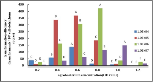 Effect of Agrobacterium concentration on transformation efficiency.Note: In the same series (four series), the same capital letters indicate no significant difference (p>0.01), whereas different capital letters indicate significant differences (p<0.01).