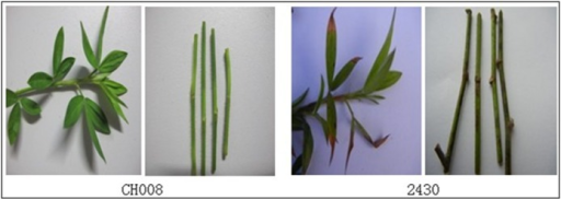 Incidence of different parts of plants after re-screening and inoculation.