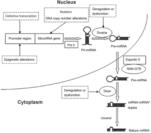 Micro (mi)RNA regulation mechanisms. miRNAs may be regulated by a number of mechanisms, including gene mutation, alteration of DNA copies, defective transcription and dysregulation of miRNA biogenesis components, as well as by epigenetic alteration.