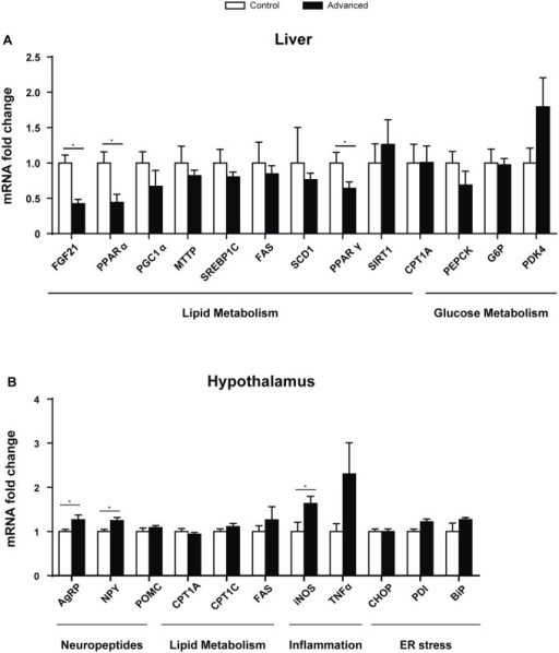 Gene expression analysis in liver and hypothalamus.(A) Expression of genes involved in lipid and glucose metabolism in the liver. (B) Lipid metabolism, inflammation, neuropeptides and Endoplasmic Reticulum (ER) stress genes were analysed in the hypothalamus. (*p<0.05, n = 7–8).