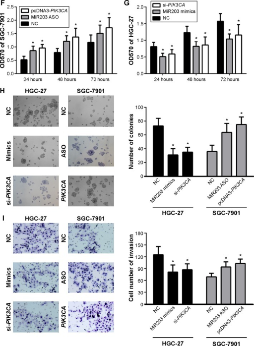 MiR203 expression level correlated with the expression of PIK3CA, and significantly decreased gastric cancer cell proliferation and invasion.Notes: (A) Luciferase reporter gene assay indicated that miR203 targeted PIK3CA. (B) The miR203 expression pattern in gastric cancer cells. (C) The PIK3CA expression pattern in gastric cancer cells. (D) Overexpression of miR203 in HGC-27 decreased PIK3CA expression and knockdown of miR203 in SGC-7901 increased PIK3CA expression, this result indicated that miR203 expression negatively correlated with PIK3CA. (E) Overexpression of PIK3CA in SGC-7901 and knockdown of PIK3CA in HGC-27. (F) MTT assay suggested that miR203 mimics inhibited proliferation of gastric cancer cells partly due to downregulating PIK3CA expression. (G) MTT assay suggested that miR203 ASO increase proliferation of gastric cancer cells via upregulating PIK3CA. (H) Clone formation assays suggested that miR203 inhibited clone formation capacity by downregulating PIK3CA. (I) Transwell assays indicated that miR203 decreased invasion of gastric cancer cells by targeting PIK3CA. *P<0.05 represents the values compared to the NC group.Abbreviations: UTR, untranslated region; NC, normal control; ASO, antisense oligonucleotides; OD, optical density.