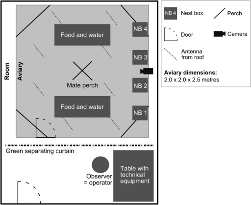 Group housing.Overview of experimental room including aviary and technical set-up.DOI:http://dx.doi.org/10.7554/eLife.07770.004