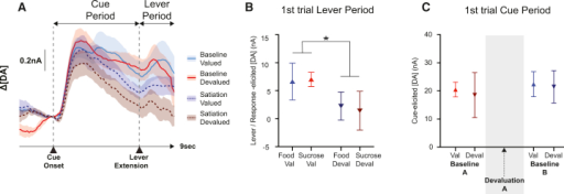 "Cue-Elicited Dopamine Release on First Trials of the Session(A) Average dopamine levels in a 5-s window after cue onset on the first food/sucrose solution trial in baselines A and B. Baseline data are divided into ""valued"" (Val) or ""devalued"" (Deval) based on which reinforcer the animals had free access to in devaluation A.(B) Average dopamine signals after cue onset on the first food/sucrose solution trial in the baseline and devaluation sessions. Baseline data here are divided up based on which reinforcer the animals had free access to in the subsequent devaluation session.(C) Average dopamine levels in a 2-s post-lever extension window (prior to reward delivery) on the first food or sucrose solution trial, averaged across the devaluation sessions.Levels were significantly reduced on the first devalued trial compared to the first valued trial (∗p < 0.05, ANOVA). All averages indicate mean ± SEM. DA, dopamine."