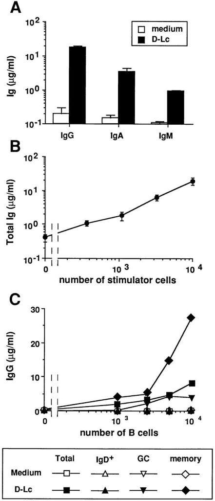 D–Lc strongly enhance Ig production by CD40-activated  memory B cells. B cells were cultured over CD40L L cells in the presence  or absence of D–Lc and their supernatants were harvested after 15 d and  assayed for presence of (A) IgG, IgA, and IgM. (B) Increasing numbers of  D–Lc were added to 104 CD40-activated B cells and total Ig production  was measured after 15 d of coculture. Igs levels are expressed as mean ±  SD of triplicate cultures (results from 1 experiment representative of 10).  (C) B cells were purified into IgD+ B cells and IgD− B cells using the  MACS system (purification detailed in Materials and Methods). IgD− B  cells were further separated into CD38+CD39− germinal center B cells  (GC) and CD38−CD39+ memory B cells using mAbs and bead depletion  as detailed in Materials and Methods. Increasing numbers of either total B  cells, MACS purified sIgD+ B cells, GC cells, or memory B cells were  cultured over 2.5 × 103 irradiated CD40L L cells in medium alone or in  the presence of 104 irradiated D–Lc. (SD ⩽ 10%). (results from 1 of   3 experiments). No significant B cell proliferation and differentiation was observed in absence of CD40L L cells.