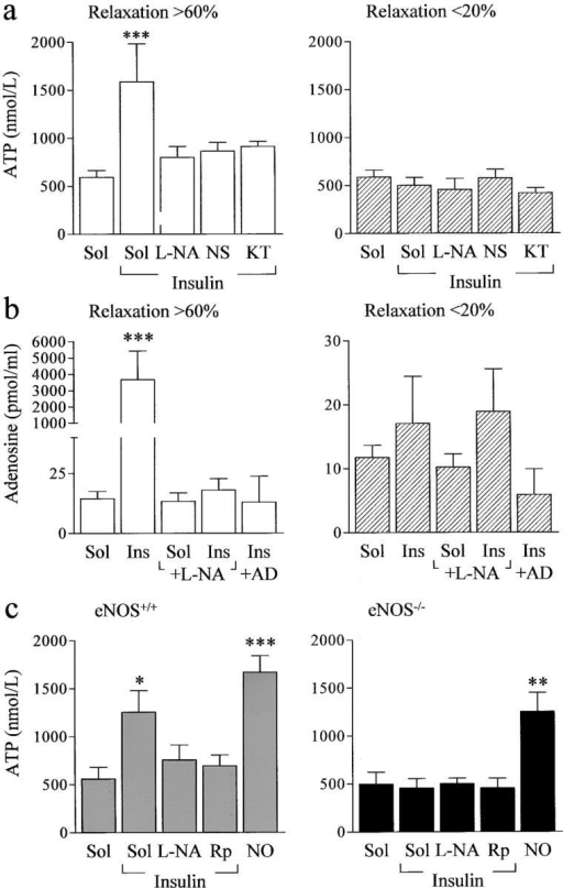 Insulin-stimulated and NO-dependent release of ATP and adenosine from washed human and murine platelets. (a) Effect of L-NA (300 μmol/L, 30 min), the guanylyl cyclase inhibitor, NS 2028 (10 μmol/L, 30 min), and the G kinase inhibitor, KT 5823 (1 μmol/L, 30 min), on the insulin (1 μmol/L, 10 min)-induced release of ATP from washed human platelets. (b) Effect of L-NA (300 μmol/L, 30 min) on the release of adenosine from washed human platelets incubated with either solvent (Sol) or insulin (1 μmol/L, 10 min). In some experiments, adenosine deaminase (50 U/ml) was added to the supernatant before stimulation. In each case, the ability of the supernatant to relax precontracted rings of porcine coronary artery was assessed, and the results were divided into two categories, i.e., the relaxation induced by the supernatant of insulin-stimulated platelets was >60% (responders) or relaxation was <20% (non responders). (c) Effect of insulin (1 μmol/L, 10 min) and NO (DETA NONOate, 1 μmol/L, 10 min) on the release of ATP from platelets derived from either wild-type (eNOS+/+) or eNOS−/− mice. Experiments were performed in the presence of solvent (Sol), L-NA, or Rp-8CPT-cGMPs (10 μmol/L). The results shown represent the mean ± SEM of data obtained in 6–10 independent experiments; *P < 0.05, **P < 0.01, and ***P < 0.001 versus the response obtained using the supernatant from insulin-stimulated platelets.