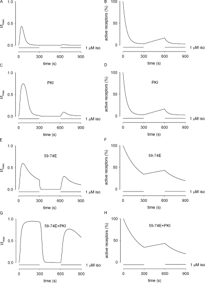 Simulations of the recovery of isoproterenol-induced signals following a 5-min stimulation and a 5-min washout (the two-pulse protocol). The simulations depict the response of the system to an initial 5-min exposure to 1 μM isoproterenol, followed by a 5-min wash, and then a second exposure to 1 μM isoproterenol. Under control conditions (A), and in the presence of 20 nM PKI (C), only small currents are induced by a second exposure to isoproterenol. (B and D) This was primarily due to a reduction in the number of active receptors. (E and F) Inhibition of GRK activity with 3 μM 59-74E allows a second isoproterenol response that is substantially larger (∼50% of the peak response to the initial pulse) due to an increased number of receptors at the start of the second pulse. (G and H) In the presence of both PKI and 59-74E, the cAMP response was further increased, due to the increased number of receptors at the start of the second pulse, and the loss of PKA-mediated regulation of PDE activity. These simulations are consistent with the data presented in Fig. 4.