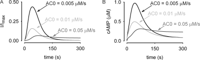 Simulated effects of increased basal AC activity on β2AR-mediated cAMP signaling. (A and B)Increasing basal adenylyl cyclase activity from control levels of 0.005 μM/s to 0.05 μM/s increased both the basal PKA and PDE activities, in essence priming the negative feedback loop. The effects of this priming phenomena were (B) smaller cAMP signals leading to (A) decreased peak currents through CNG channels. In addition, the overall kinetics of the signal were slowed with increased basal AC activity, and, at the highest basal AC activity shown, were no longer transient.