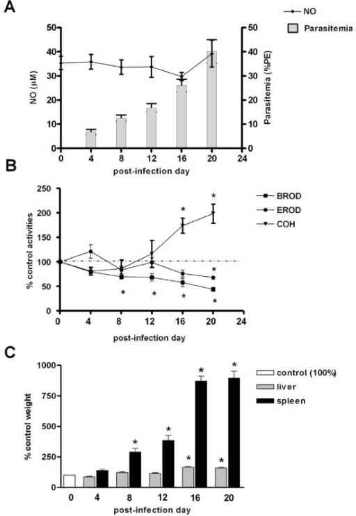 Effects of P.berghei infection on CYP activities, NO pr