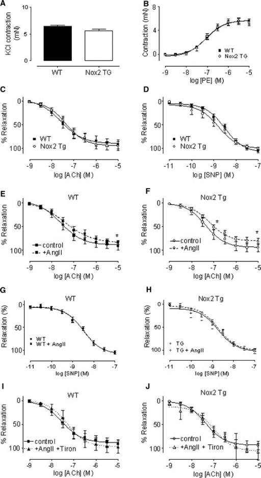 Endothelial function in isolated aortae from Tg and WT mice. a Aortic contraction to a single dose of KCl (80 mM). N = 10. b Dose response curve to phenylephrine (PE; 10−9 to 10−6 M). N = 10. c Endothelial-dependent relaxation to acetylcholine (ACh). N = 10. d Relaxation to sodium nitroprusside (SNP). N = 10. e, f Relaxation to Ach in the presence and absence of AngII (0.1 μM, 30 min) in WT and Tg aorta, respectively. N = 10. *P < 0.05 comparing EC50 and Emax. g, h Relaxation to SNP in WT and Tg, respectively, in the presence and absence of AngII (0.1 μM, 30 min). N = 10. i, j Relaxation to ACh in WT and Tg aortae, respectively, after co-incubation with AngII (0.1 μM, 30 min) and the superoxide scavenger, tiron (10 mM). N = 3, P = NS
