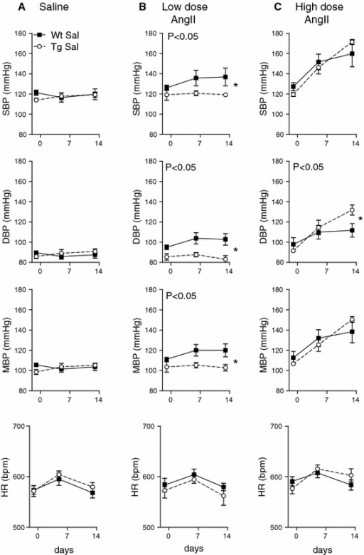 Effect of chronic angiotensin II treatment on blood pressure in Tg and WT mice. Ambulatory blood pressure was measured in WT and Tg mice before and after implantation of osmotic pumps delivering either a saline, b low dose AngII (0.3 mg/kg/day) or c high dose AngII (1.1 mg/kg/day). Systolic, diastolic and mean blood pressure and heart rate were averaged over 24 h periods. n = 6, *P < 0.05 for a significant interaction by two-way ANOVA