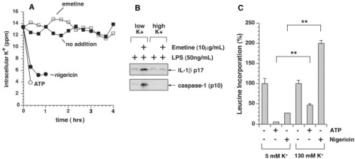 Inhibition of protein synthesis fails to elicit efflux of potassium from cells.A) Intracellular potassium in WT BMDM was analyzed by ICP-MS after priming with LPS for 4 h and exposure to emetine, ATP, and nigericin for indicated times. Data are represented as mean ± SEM from triplicate dishes. Measurements of potassium release by cells exposed to ATP and nigericin were terminated at 10 min and 60 min, respectively, as a result of cytotoxicity and detachment of cells from the dishes. Cells exposed to emetine showed no signs of cytotoxicity or detachment by 4 h. B) Elevated potassium blocks emetine-mediated release of IL-1ß and processing of caspase-1. LPS-primed BMDM were either exposed or not exposed to 10 µg/ml emetine for 4 h, at which time proteins were precipitated from the media with TCA and analyzed by Western blotting as shown. C) BMDM in triplicate wells were pulse-labeled in medium containing [3H]-leucine for 15 min prior to harvest at the indicated times and the amount of [3H]-leucine incorporation was measured.