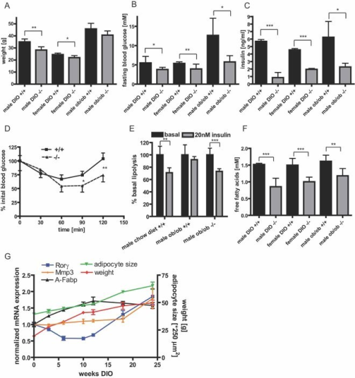 Loss of RORγ protects against diet-induced insulin resistance in miceA. Body weight of Rorγ−/− and wild-type mice (12 weeks) crossed into the ob/ob background or fed a high-fat diet (DIO) for 8 weeks (n = 7–10).B,C. Fasting blood glucose and serum insulin of ob/ob and high-fat diet Rorγ−/− and wild-type mice (n = 7–10).D. Insulin tolerance test with male Rorγ−/− and wild-type mice after 8 weeks of high-fat diet injected intraperitoneal (i.p.) with 0.75 U/kg insulin (n = 7).E.In vitro lipolysis of isolated adipocytes from 12-week-old wild-type mice on a chow diet, ob/ob wild-type and ob/ob Rorγ−/− mice treated with or without insulin normalized to cell number and set to 100% for basal lipolysis (n = 4).F. Fasting free fatty acid serum concentrations of ob/ob and high-fat diet Rorγ−/− and wild-type mice (n = 7–10).G. Expression of Rorγ, Mmp3 and A-Fabp in visceral adipose tissue of male C57Bl/6 mice during a time course of high-fat diet feeding. Body weight and mean adipocyte size of the animals was monitored.