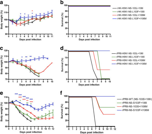 Virulence is increased by each of the 103L and 106I NS1 mutations in the H5N1-NS gene on human and mouse adapted virus backbones as well as for 103S and 106I PR8 NS1 gene mutations in PR8 virus. a and b. Groups of 3 CD-1 mice were infected intranasally with 5 × 106 pfu of rHK viruses possessing wt (103L + 106I) or mutant H5N1 NS1 genes that differed due to the indicated mutations at positions 103 and 106. c and d. Groups of 3 CD-1 mice were infected intranasally with 1 × 104 pfu with the different rPR8 viruses possessing wt (103L + 106I) or mutant H5N1 NS1 genes that differed due to the indicated mutations at positions 103 and 106. e and f, Groups of 5 BALB/c mice were infected intranasally with 1 × 104 pfu with wt rPR8 or mutants that differed due to the indicated mutations at positions 103 and 106. The percent of body weight loss was calculated as the mice body weight loss was recorded daily throughout the whole course of the experiment. Values are shown as average +/− standard deviation (*p<0.05, **p<0.01, *** p<0.001; two-tailed student's t-test).