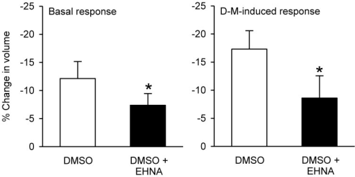 Effects EHNA (5 × 10−4 M) on cell volume and volume responses to D-M. Left panel (Basal response): % reduction in volume under basal conditions after addition of DMSO or EHNA dissolved in DMSO, during the 30 min incubation period. Right panel (D-M induced response): % reduction in volume after subsequent addition of 120 mOsM D-M dissolved in DMSO. In these experiments a control volume measurement was made before incubating the cells with vehicle or agents; the cells used in each replicate were from the same preparation. *Significantly different from D-M. Basal response, n = 4; DMSO-induced response.