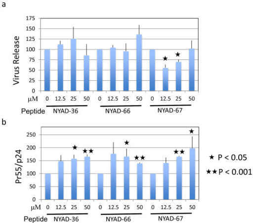 i + 7 stapled peptides have no effect on HIV-1 release, but impair Gag processing. (a) 293T cells were transfected with pNL4-3 and 6 h after transfection treated with indicated concentrations of NYAD-36, -66, and -67 for 16–20 h. Cells were metabolically labeled with [35S]Met/Cys for 2 h. Cells were lysed and virions were collected by ultracentrifugation. Cell and virus lysates were immunoprecipitated with HIV-Ig and subjected to SDS-PAGE. Protein band intensities were quantified by phosphorimager analysis, and HIV-1 release was calculated as the amount of virion-associated p24 relative to total (cell- plus virion-associated) Gag. (b) Accumulation of unprocessed Gag in cells was measured by calculating the ratio of Pr55Gag to p24 in cells. P values were calculated by Student's t-test, with P < 0.05 considered significant. N = 3, ± SD.