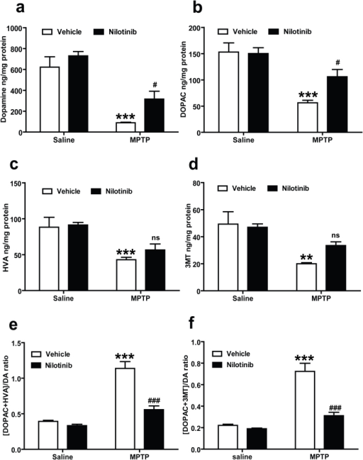 c-Abl inhibitor, nilotinib protects against MPTP-induced dopamine depletion.Nilotinib or vehicle administered mice were subjected to acute MPTP injections (20 mg/kg, MPTP free base X 4, every 2 h). Striatal dopamine (DA) and metabolites levels were analysed 7 days after the last MPTP injection by HPLC-ECD analysis. (a) Nilotinib rescues DA loss and (b) DOPAC in the striatum of MPTP mice. (c) Striatal levels of HVA and (d) 3MT were restored in mice treated with nilotinib. (e) There is a significant decrease in DA turnover [(DOPAC+HVA/DA) and (f) (DOPAC+3MT/DA)] in the striatum of nilotinib treated mice. Error bars represent the mean ± SEM, n = 5 mice per group. Two-way ANOVA was used to test significant and followed with post-hoc Bonferroni test to compare with the multiple group. **p<0.0002, *** p<0.0001 for MPTP with compare control group, #p<0.05, ### p<0.001 for Nil+ MPTP compared MPTP group. (ns: not significant).