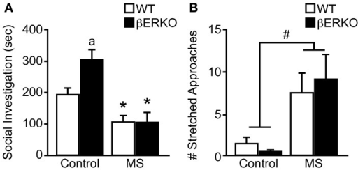 Genotype and MS effects on social investigative behaviors during SIT. (A) Cumulative social investigation duration and (B) number of stretched approaches toward an unfamiliar female opponent mouse in SIT. All data are presented as mean ± s.e.m. *p < 0.05 vs. control of same genotype; ap < 0.05 vs. WT of same treatment group; #p < 0.05.