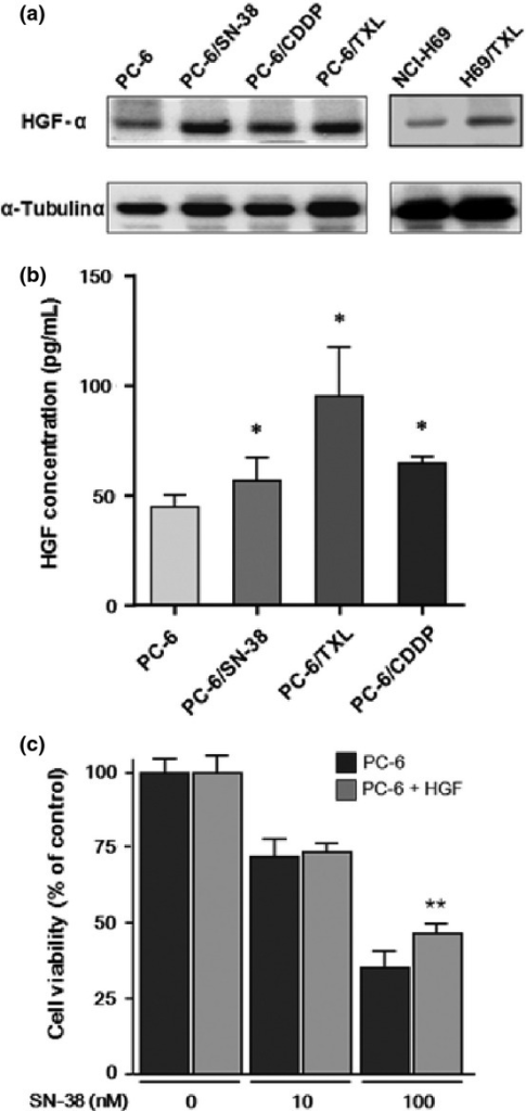 Hepatocyte growth factor (HGF) protein expression in cytotoxic anticancer drug-resistant small-cell lung cancer cells, including PC-6 and NCI-H69 parental cells and those resistant to 7-ethyl-10-hydroxycamptothesin (PC-6/SN-38), paclitaxel (PC-6/TXL and H69/TXL), and cisplatin (PC-6/CDDP). (a) Levels of HGF protein expression in cytotoxic anticancer drug-resistant cells were examined by Western blotting. (b) Secretion of HGF in resistant cells was quantified by quantitative ELISA and compared to that in parental cells. (c) Growth inhibition of SN-38 to PC-6 cultured with or without HGF (50 ng/mL) for 2 weeks was examined with the MTS (3-(4,5-dimethylthiazol-2-yl)-5-(3-carboxymethoxyphenyl)-2-(4-sulfophenyl)-2H-tetrazolium, inner salt) assay. *P < 0.05; **P < 0.01.