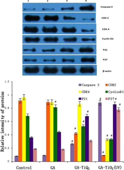 Protein expression of apoptosis-associated genes by Western blot. K562 cells were treated with different reagents for 24 h. Notes: data were normalized to β-actin expression. (1) K562 cells were incubated with same volume of saline; (2) K562 cells were treated with GA; (3) K562 cells were incubated with GA-TiO2 nanocomposites; (4) K562 cells were incubated with GA-TiO2 nanocomposites with UV irradiation; data were figured as mean ± SD. #P < 0.05 when compared with the control group.