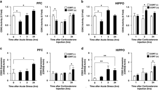 Acute stress and corticosterone injection differentially regulate CDK5 activity and protein expression in mouse PFC and HIPPO. Mice were immobilized in a 50 ml Falcon tube for 1 h or injected intraperitoneally with corticosterone (CORT, 20 mg kg−1) and were killed at 0, 1, 3 and 24 h after the treatment. CDK5 activity (a and b) and protein expression (c and d) were examined respectively with the CDK kinase assay and with the western blot using anti-CDK5 antibody. Bars represent mean±s.e. values of fold kinase activity against baseline (the condition at time 0 for AS, and the condition at 1 h in the absence of CORT for CORT injection) and the protein levels of CDK5. *P<0.05, **P<0.01, compared with the conditions indicated. HIPPO, hippocampus; PFC, prefrontal cortex.