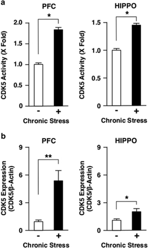 Chronic stress differentially regulates CDK5 activity and protein expression in mouse PFC and HIPPO. Mice were treated with chronic unpredictable stress for 28 days. CDK5 activity (a) and protein expression (b) were examined, respectively, with the CDK5 kinase assay and with the western blot using anti-CDK5 antibody. Bars represent mean±s.e. values of fold kinase activity against baseline (the condition in the absence of chronic stress) and the protein levels of CDK5 in the presence (closed bars) or absence (open bars) of chronic stress. *P<0.05, **P<0.01, compared with the conditions indicated. HIPPO, hippocampus; PFC, prefrontal cortex.