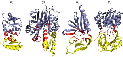 Examples of DDIs involving various SSE class pairs: (a) α-rich with α-rich (PDB code 1VRC, chains A, C); (b) α-rich with α + γ (PDB code 2CG5, chains A, B); (c) α + β + γ with α + β + γ (PDB code 2YIB, chains F, B); (d) γ-rich with β + γ (PDB code 1TE1, chains A, B). Binding site SSEs are shown in red. This figure was drawn using the VMD program (http://www.ks.uiuc.edu/Research/vmd/).