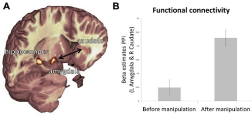 Relationship between representations of value, belief, and reality. (A) Depiction of functional ROIs of the left hippocampus, left amygdala and right caudate. (B) PPI beta estimates reveal that functional connectivity from pre-manipulation session to post-manipulation session is increased between the left amygdala and right caudate. Error bars show within subject standard error of the mean (Cousineau, 2005).
