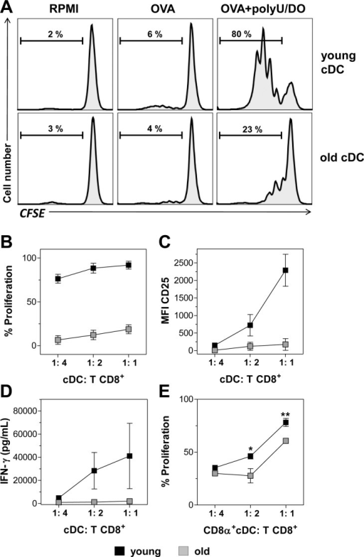 Aged splenic cDCs have impaired ability to cross-prime naïve CD8+ T cells in vitro.Total (A-D) or CD8α+ (E) cDCs purified from young and old mice were incubated with 1 mg/mL OVA mixed with 20 μg/mL polyU/DO for 90 minutes. Additional cDCs from young and old mice were incubated with RPMI or OVA as control. cDCs were then washed and cultured for 3 days with CFSE-labeled CD8β+ T cells isolated from the spleen of OT-I mice at different DC:T cell ratios. After culture, T cell proliferation and CD25 expression were analyzed by flow cytometry. (A) Representative histograms of T cell proliferation are shown from 1:1 ratio. (B, E) Percentages of proliferating T cells, (C) CD25 expression and (D) IFN-γ content in culture supernatants, determined by ELISA. Data show the mean ± SEM. *p < 0.05, **p < 0.01. Results are representative of 3 independent experiments (3–4 mice/age group/experiment).