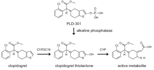Metabolic Pathways of Clopidogrel and PLD-301.