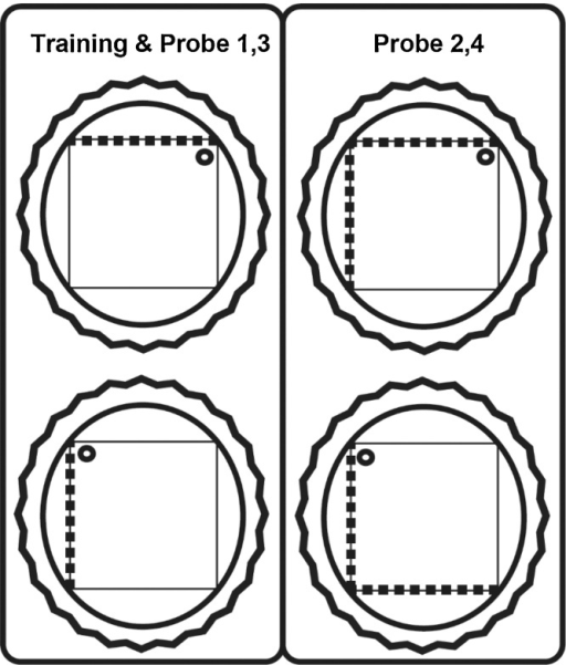 Schematic diagram of the square maze with different patterned walls. The inner square shape depicts the pool, the surrounding circle is the larger pool within which the square pool is placed, and the rippled circle represents the curtain used to block distal cues. The broken lines represent striped walls. The small circle represents the platform on which the rat was placed (passive trials). In Probes 1 & 3 (left column), the maze had one striped wall, as was the case in all active and passive training days. In Probes 2 & 4 (right column), the maze had two adjacent striped walls. 'Passive' refers to training days when the rat was placed on the escape platform (no swimming). 'Active' refers to training days when the rat was placed in the water-maze and swam to find the escape platform.