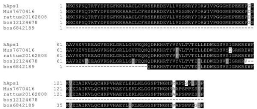 Comparison of hAps1 with translated EST sequences from mouse and cow. No full-length bovine EST for the hAps1 homologue is available, hence the composite of two separate sequences is shown. A predicted rat protein from genomic sequencing is also shown.