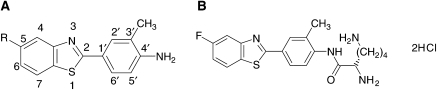 Structures of (A) 2-(4-amino-3-methylphenyl)benzothiazole (R=H; DF 203; NSC 674495), 2-(4-amino-3-methylphenyl)-5-fluorobenzothiazole (R=F; 5F 203, NSC 703786) and (B) the lysylamide dihydrochloride salt of 5F 203 (Phortress, NSC 710305).