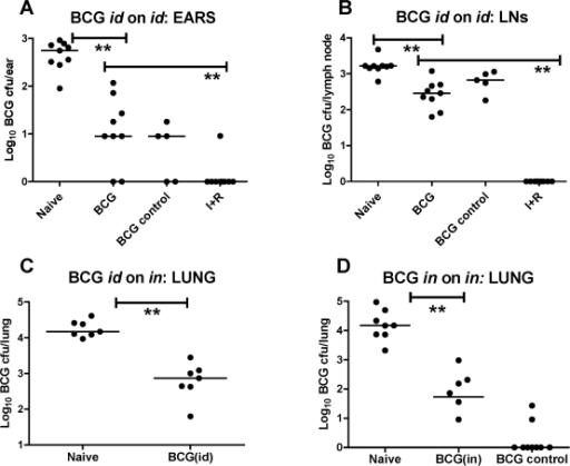 "Effect of BCG on a 4-week id and in BCG challenge.BALB/c mice were immunized id with 2.5×103 CFU BCG. Naïve and antibiotic-treated (I+R) mice received no immunization. Four weeks later all mice were challenged either id or in with 4×103 CFU BCG, except the BCG control group who received no challenge. Immediately post-challenge the I+R group was treated for 4 weeks with isoniazid and rifampicin. Ears (a), LNs (b) and lungs (c) were harvested 4 weeks after challenge (spleen cfu data not shown). (d) shows the effect of in BCG on in challenge in a separate experiment. Here, BALB/c mice were immunized in with 1×103 CFU BCG. Naïve mice received no immunization. 4 weeks later in-immunized and naïve mice were challenged with 4×104 CFU BCG in. The ""BCG in control"" group received no challenge. Lungs were harvested 4 weeks after BCG challenge in all groups. CFU from plating of fresh tissues are shown. Log10 BCG CFU individual data points for each mouse are shown. Bars represent the median per group. (a) Ears (**P<0.01, n = 10); (b) LNs (**P<0.01, n = 10); (c) Lungs (**P<0.01, n = 10); (d) Lungs P<0.01, n = 8 naïve; n = 6 BCG in; n = 8 BCG in control)."