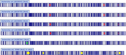 Whole chromosomal Optical Maps of the EHEC O104:H4 outbreak and related strains.Optical Maps were created from current outbreak isolates (LB isolates) and 01-09591 using NcoI as described. An in silico reference map was also created from the published EAEC 55989 sequence [11]. Optical and in silico maps were compared to reveal shared and unique elements. Shared restriction fragments are white/un-highlighted. Regions shared by the current outbreak isolates but unique relative to 01-09591 and EAEC 55989 are highlighted in red, regions unique to 01-09591 are highlighted in green, and regions unique to EAEC 55989 are highlighted in yellow. Perceived minor variations in banding patterns are due to fragment sizes less than 2 kb and therefore not included in subsequent analysis (see Methods).